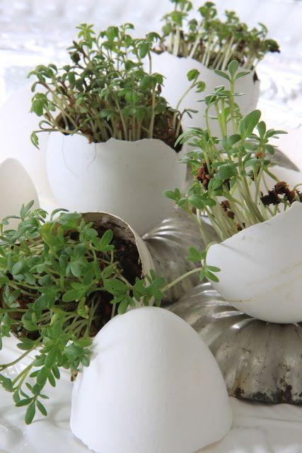 Egg Shell Plantings.  Sjarmerende GJENBRUK