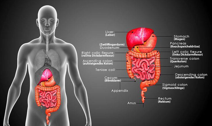 Bauchspeicheldrüsenkrebs Symptome