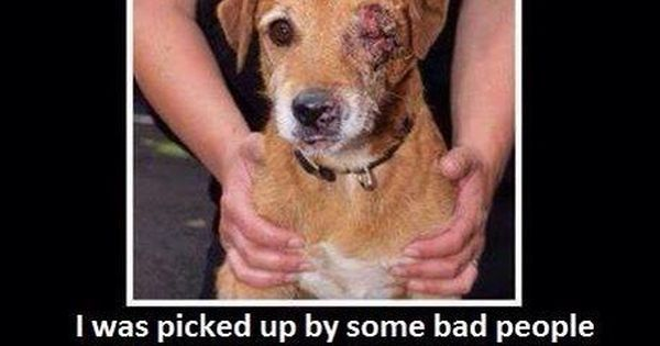 *slightly graphic* NO #pets on #craigslist NO #free to a good home pic.twitter.com/KjWfMNurPG   animals   Pinterest   Pets, Free things and Free dogs