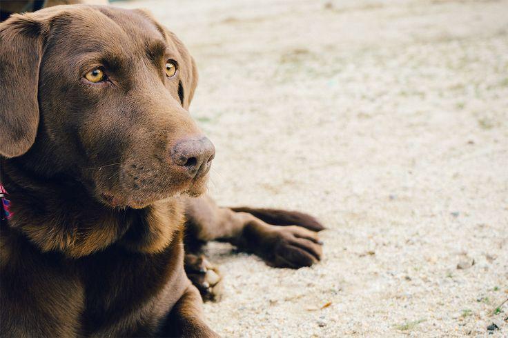 Obesidade em cães: confira 10 dicas para combatê-la. Assim como os seres humanos, os animais também sofrem com a obesidade. Alguns apresentam tendência para ganho de peso. Confira recomendações para os donos.