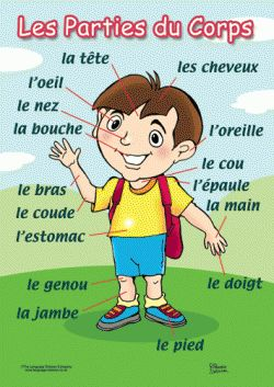 The body parts in French