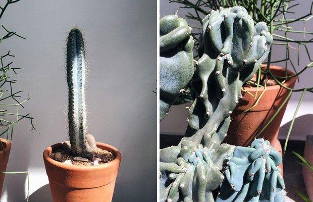 Dicas práticas para cuidar das suculentas (foto: FLO atelier botânico)