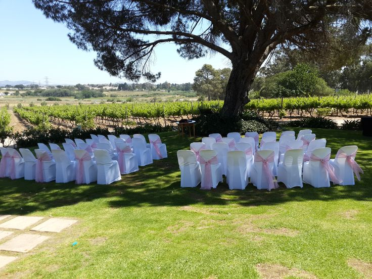Wedding ceremony chairs under the tree