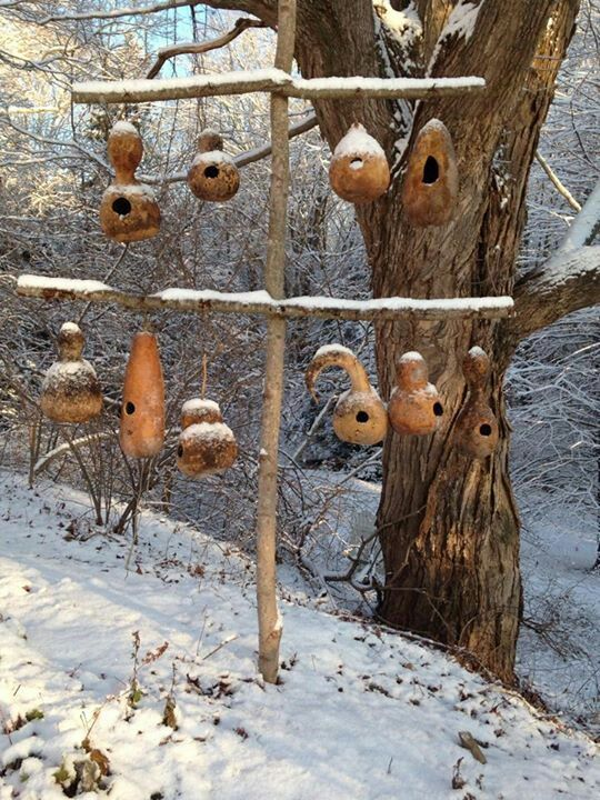 Dried gourd birdhouses.