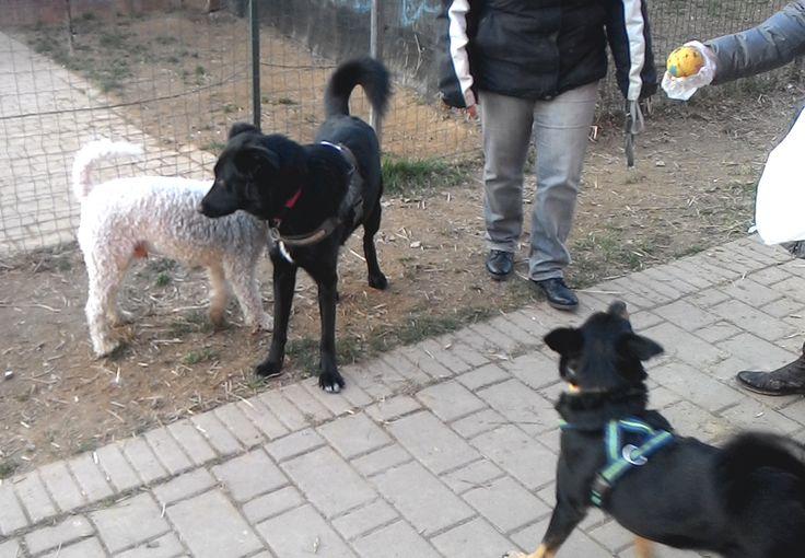 29/01/2016 - Torino con Peja e Zorba