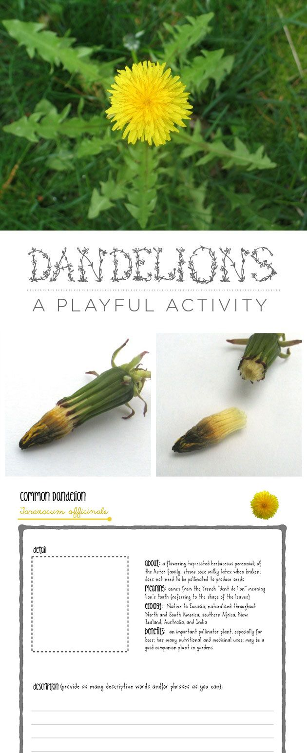 Some dandelion inspiration on this lovely spring day!