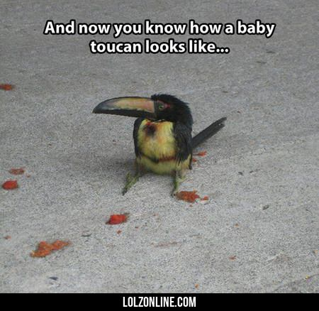 And Now You Know How A Baby Toucan Looks Like#funny #lol #lolzonline