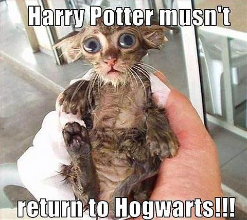 Cracks me up every time. Looks just like Dobby.: Harry Potter Jokes, Hogwarts, Real Life, Harry Potter Funny, Wet Cat, Kittens, Funny Animal, Harry Potter Humor, So Funny