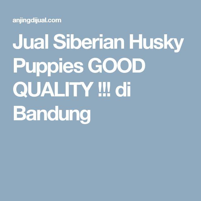 Jual Siberian Husky Puppies GOOD QUALITY !!! di Bandung