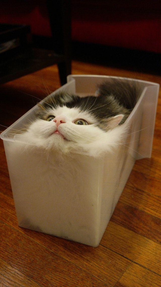 Reddit Cats Update Feline Continues To Seek Fully Liquid