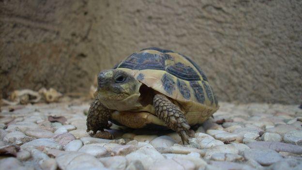 Come prendersi cura delle tartarughe di terra