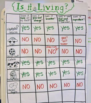 Living vs. Nonliving kindergarten-science-ideas