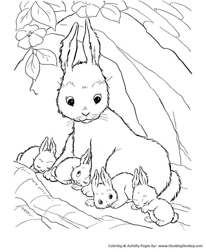 The 25 best Farm animal coloring pages ideas on Pinterest Farm
