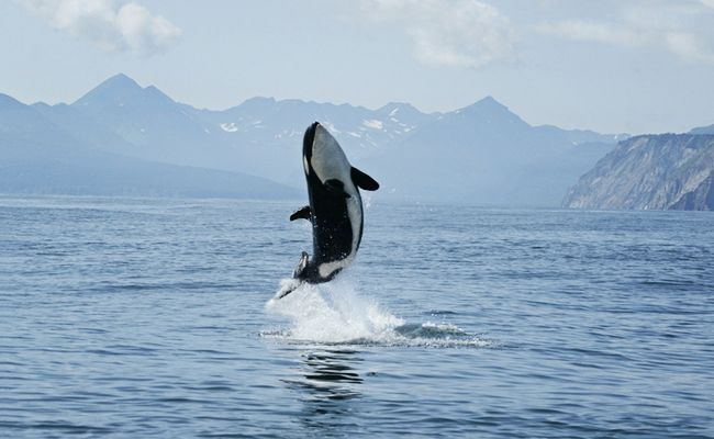 Congressman Rick Larsen Steps Up To Help End Orca Captivity In The U.S. | Care2 Causes
