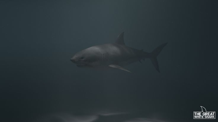 Great White Shark made in Maya/ZBrush and rendered in V-Ray.  Check for more:  https://www.facebook.com/karelkiers https://menacenl.wordpress.com/
