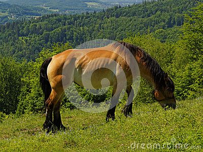 Horse in meadow in countryside in Poland