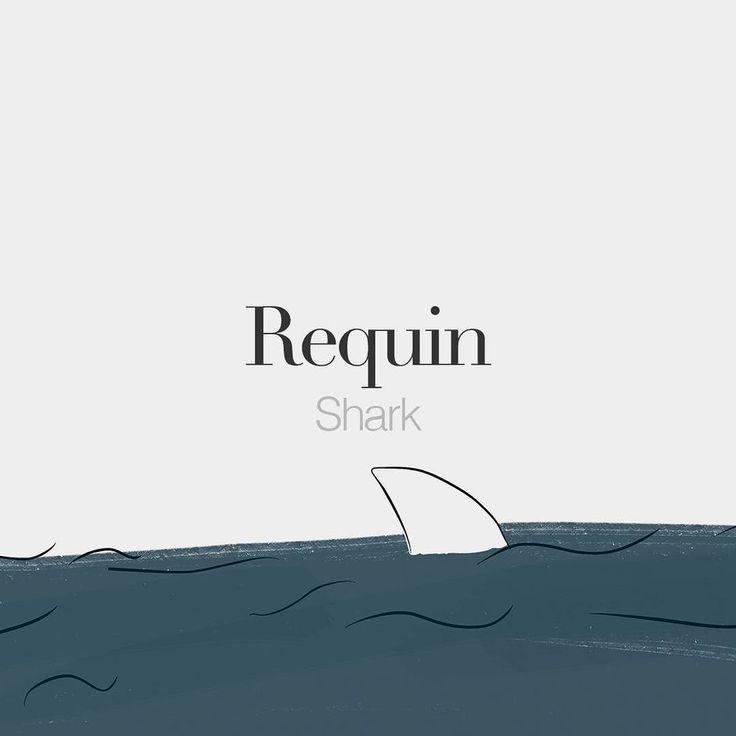 Requin (masculine word) | Shark | /ʁə.kɛ/