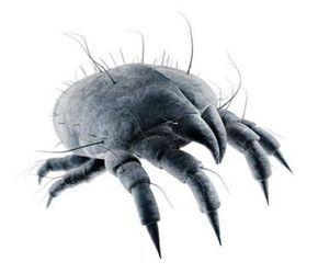 Symptome für Parasiten im Körper. Darmparasiten?! Wie funktioniert eine Parasitenkur? Welche natürlichen Anti-Parasitenmittel gibt es?