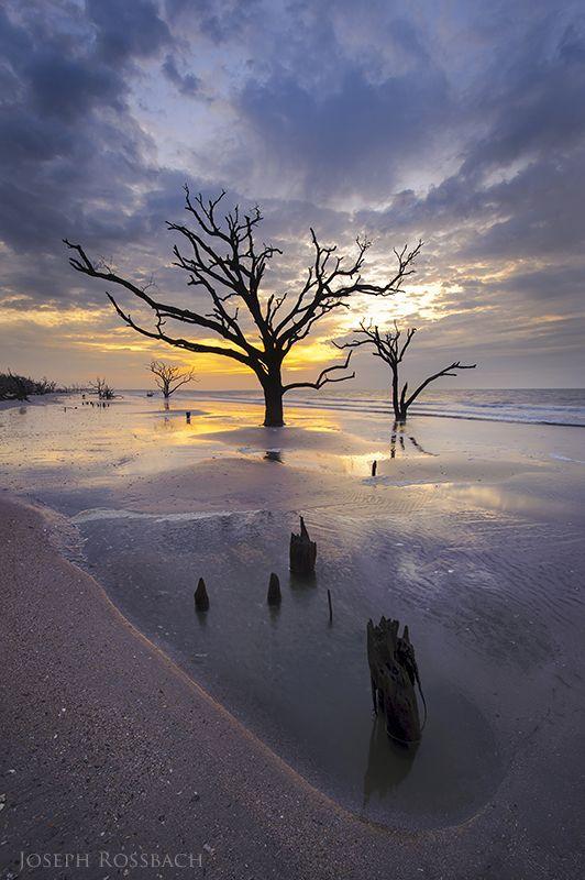228 Best Botany Bay Images On Pinterest Botany Bay