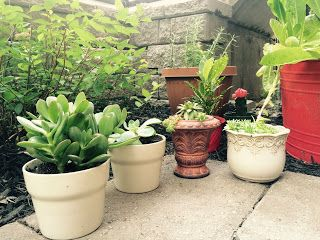 Yellow Cottage Furniture: Succulent Gardening