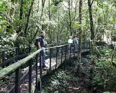 La Amistad International Park in Costa Rica and Panama - home to more than 400 bird species; birdwatchers paradise!