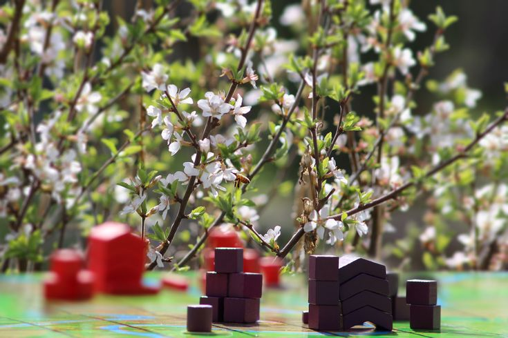 Garden Gaming - Playing Kommands with the bees.   #photography #game #boardgame #bee #sandcherry #cherryblossom #outsite #gameday #nature #wooden  www.kommands,com Support us on Kickstarter http://kck.st/2ryGVZ2