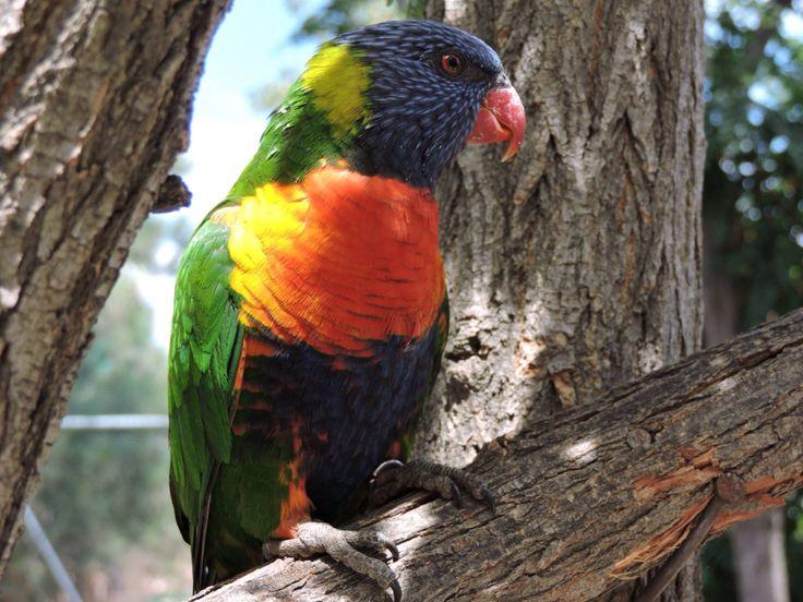Pájaro / Buin Zoo
