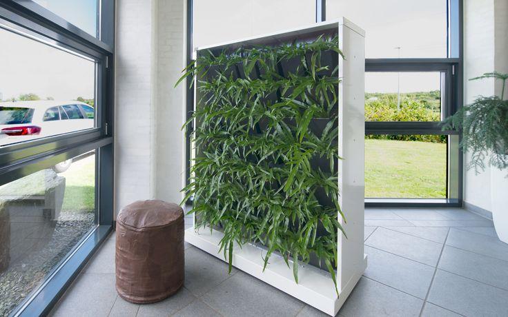 Mobil plantevæg! Hvis pladsen er lidt trang... - eller du ønsker en grøn og dekorativ afskærmning. #plantevæg #mobil