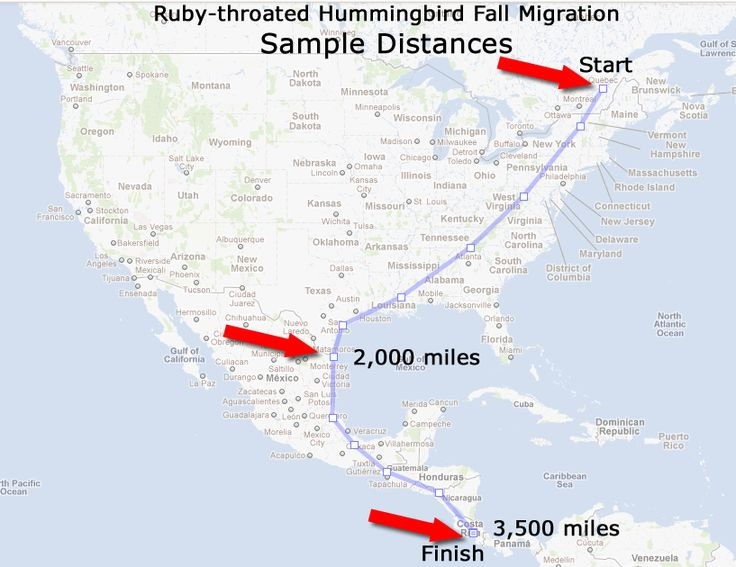 rubythroated hummingbird migration this map was