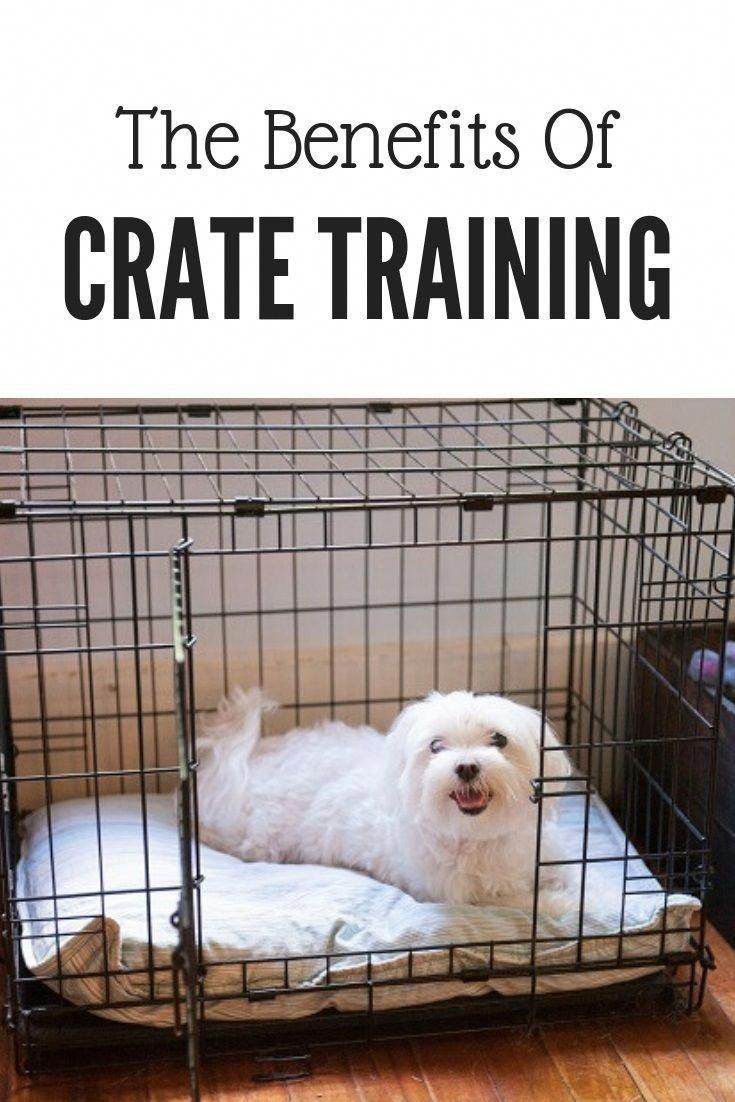 Crate Training A Dog Is Beneficial For Many Reasons Maltese