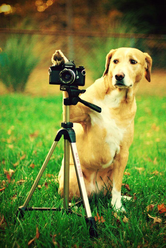 фотоаппарат и животные картинки авто начертания этой
