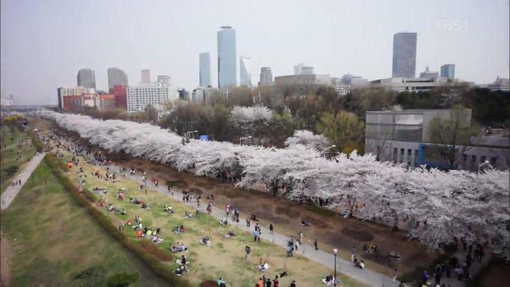 2014.04.03 [뉴스광장 영상] 벚꽃축제 / 민창호