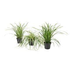 Augalai, jų stovai ir vazonai - IKEA