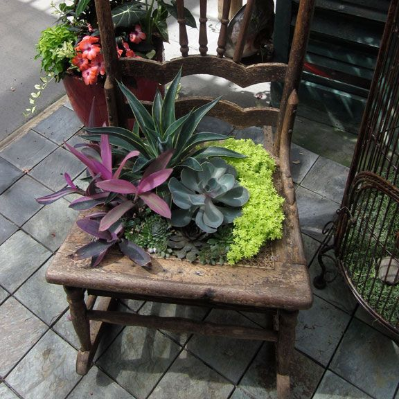 Succulents in a vintage chair The Growing Place