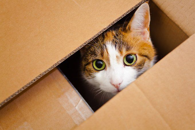 Study Shows That Boxes Reduce Stress And Aid Recovery For Cats Cattime Animals Cats Cute Cats