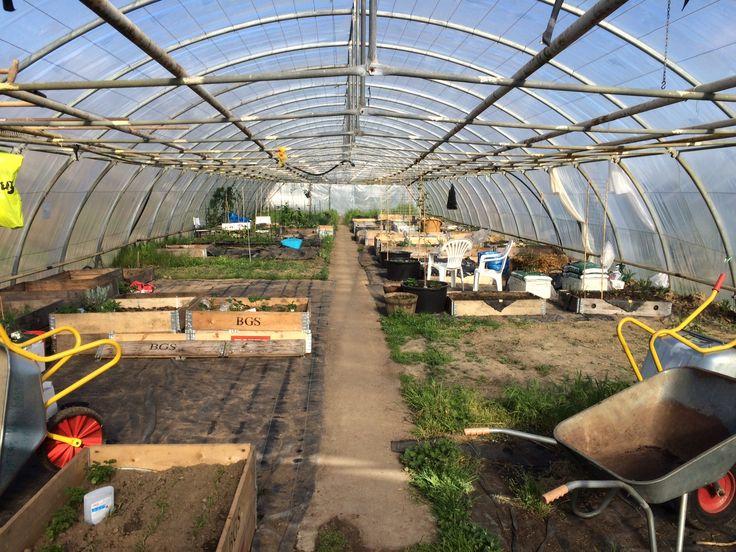 Urban farming, community greenhouse in Denmark