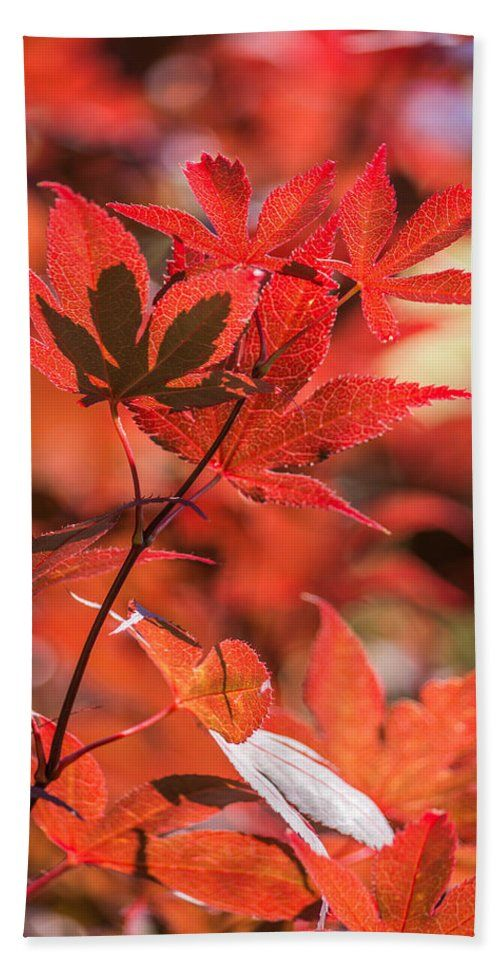 Japanese Maple Tree Hand Towel featuring the photograph Japanese Maple by Racheal Christian