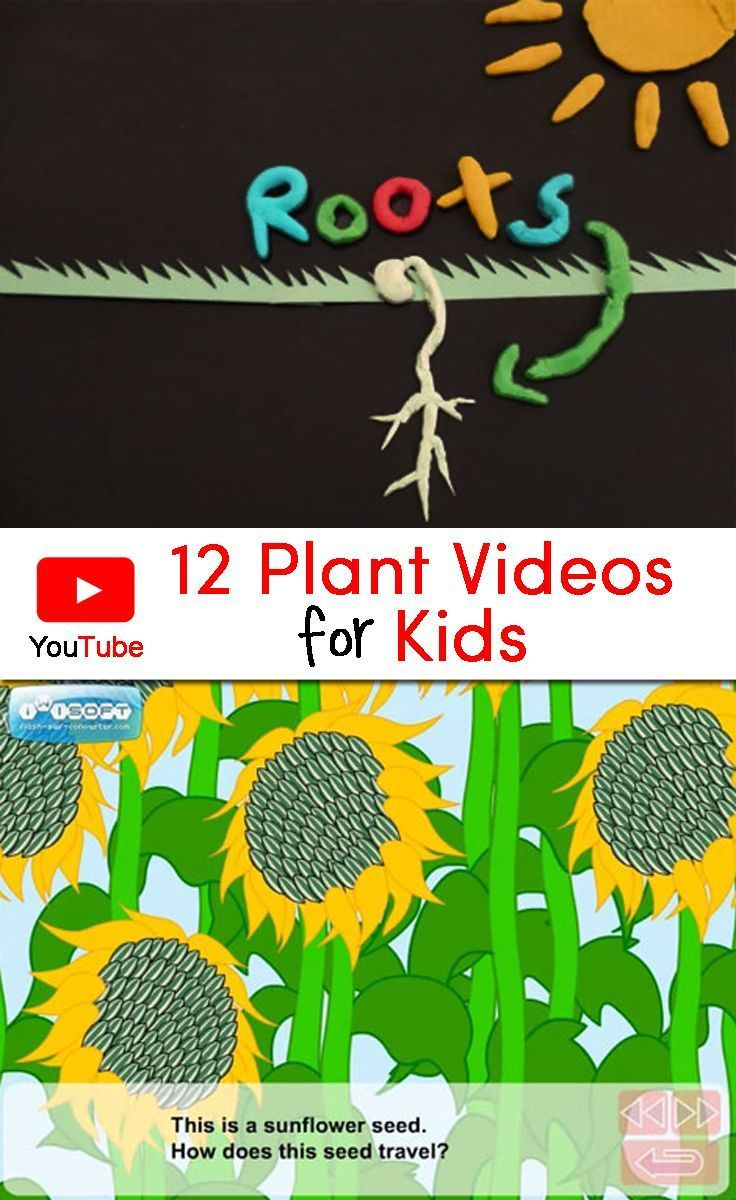 Best 10 plant science ideas on pinterest teaching plants collection of 12 plant videos for kids that would be a perfect complement to a plant robcynllc Gallery