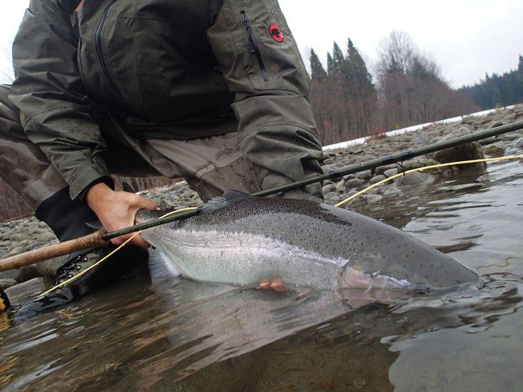 1000 images about skeena river steelhead fly fishing on pinterest deep creek lodge winter skeena river steelhead sciox Image collections