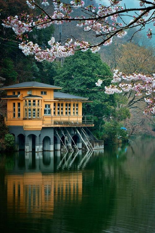 ponderation:Lakeside with blossoms. Japan. by MIYAMOTO Y