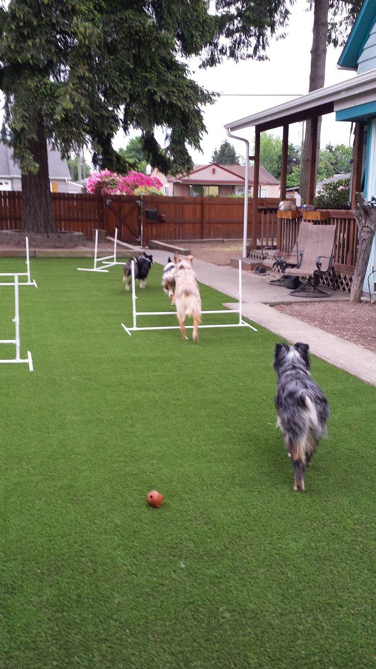 Pet Turf Artificial grass for dogs, Pet turf, Artificial