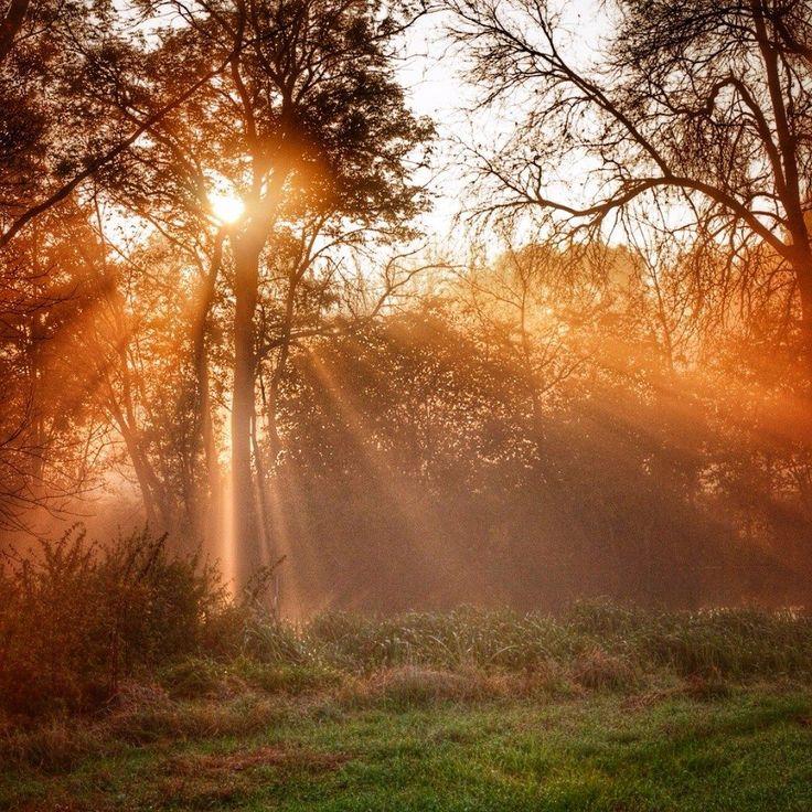 Jesień to idealny czas na polowanie na wschody słońca. Krwiste kolory mgły no i nie trzeba tak wcześnie wstawać :) Warto wcześniej upatrzyć sobie miejsce i rozstawić się ze sprzętem na kilka minut przed spektaklem bo kiedy się zacznie nie ma już czasu na poprawki. Na zdjęciu jesienny wschód w Dolinie Dolnej Wisły.  #jesień #jesien #fall #autumn #leaves #falltime #season #seasons #instafall #instagood #instaautumn #photooftheday #leaf #colorful #orange #red #autumnweather #fallweather #nature…
