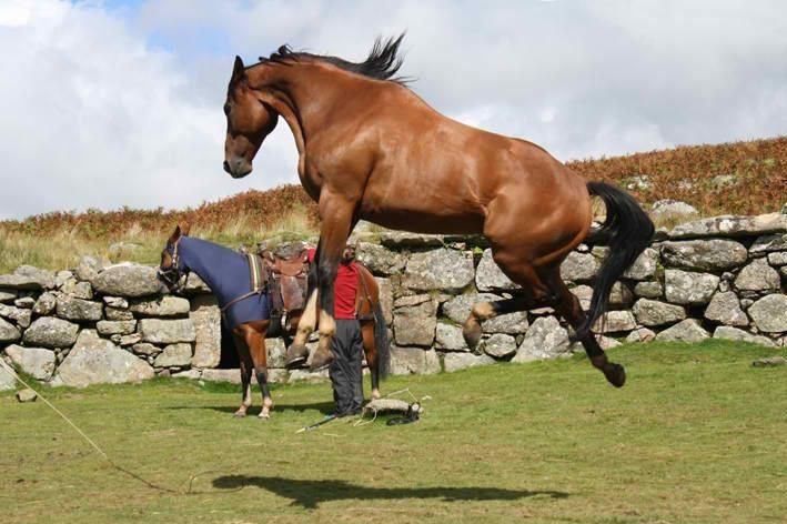 Finders Key, the horse who played Joey in War Horse.
