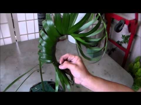 ▶ HOW TO MAKE A NAUTILUS SHELL OUT OF COMMODORE PALM LEAVES - YouTube