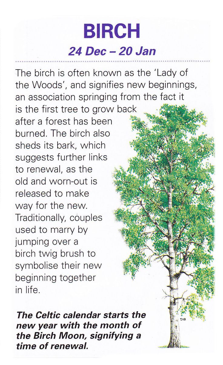 Some People Will Attach The Word Celtic To Anything Make It Tree Symbolism Meaning 1280x960