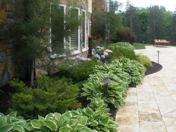 Foundation Planting Yews And Hostas Landscape Ideas