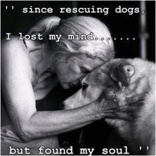 Joyful Rescues (joyfulrescuesny) on Pinterest