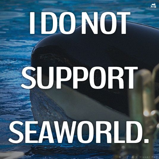 CA Bill #AB2140 (The Orca Welfare & Safety Act) went before the State Assembly today! Repin if you DO NOT SUPPORT SEAWORLD! #SeaWorldSucks