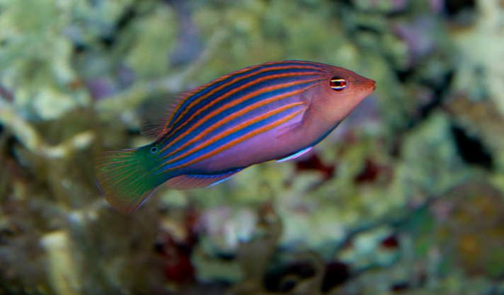 Download our aquarium maintenance logs  These maintenance