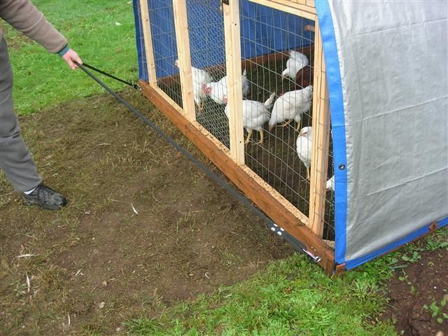 45 best chickies images on pinterest for Cheap chicken tractor